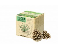 Набор для выращивания «Экокуб», сосна